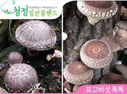 [청정임산물] 표고버섯 톡톡